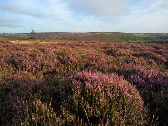 North Yorkshire Moors photograph