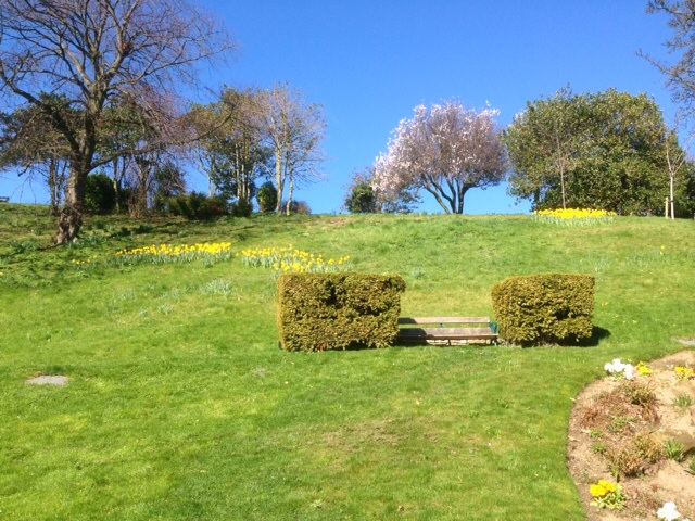 Photo of daffodils in the park